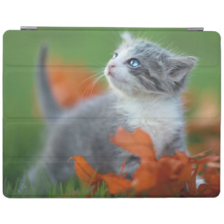 Cute Baby Kittens Playing Outdoors in the Grass iPad Cover