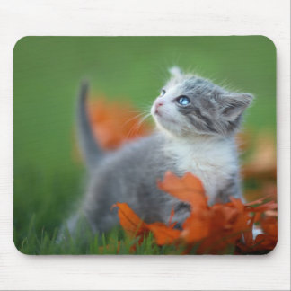 Cute Baby Kittens Playing Outdoors in the Grass Mouse Mat