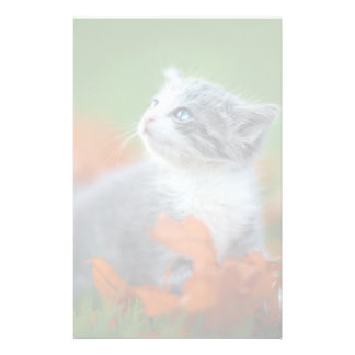 Cute Baby Kittens Playing Outdoors in the Grass Stationery