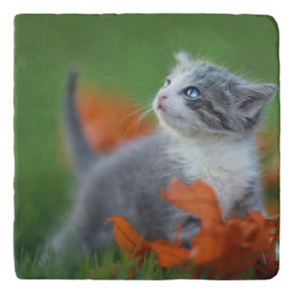 Cute Baby Kittens Playing Outdoors in the Grass Trivet