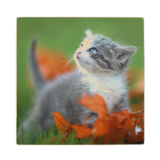Cute Baby Kittens Playing Outdoors in the Grass Wood Coaster
