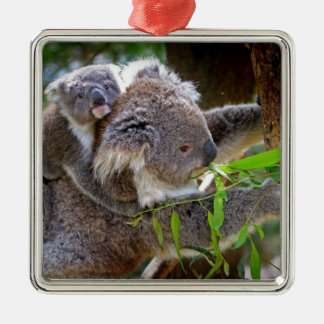 Cute baby koala bear with mom in a tree christmas ornament