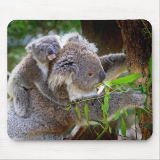Cute baby koala bear with mom in a tree mouse mat