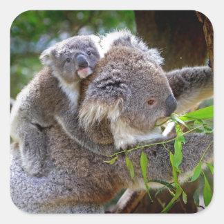 Cute baby koala bear with mom in a tree square sticker