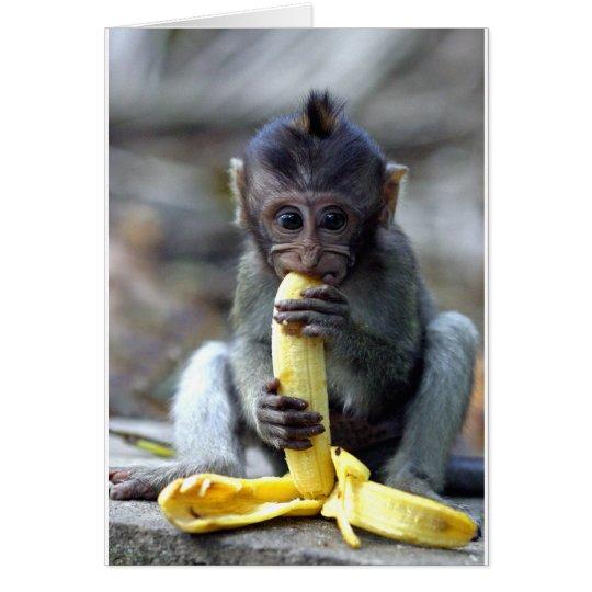 Cute baby macaque monkey enjoying banana card