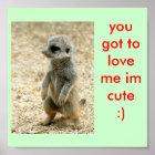 cute baby meerkat poster