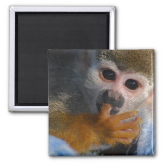 Cute Baby Monkey Refrigerator Magnet