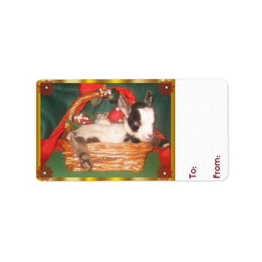 Cute Baby  Myotonic Goat Christmas Gift Tag Address Label