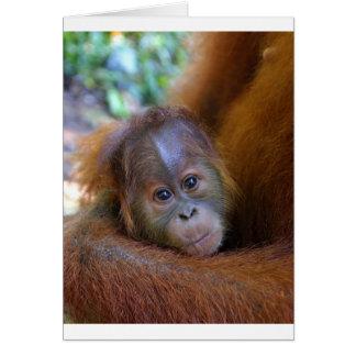 Cute baby Orangutan Card