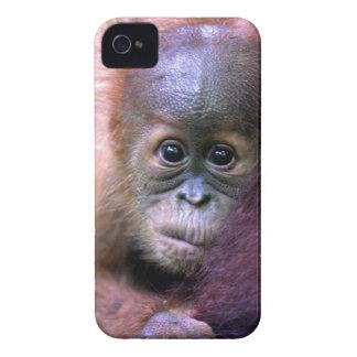 Cute baby orangutan in Sumatra iPhone 4 Cover