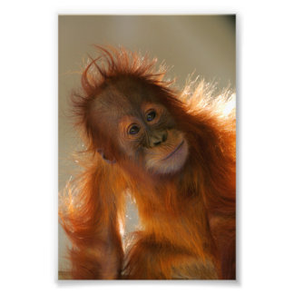 Cute Baby Orangutan Photo Print