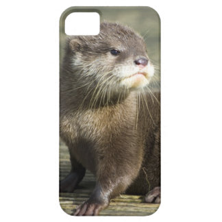 Cute Baby Otter iPhone 5 Case