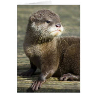 Cute Baby Otter Greeting Card