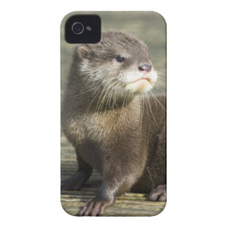 Cute Baby Otter iPhone 4 Case-Mate Cases