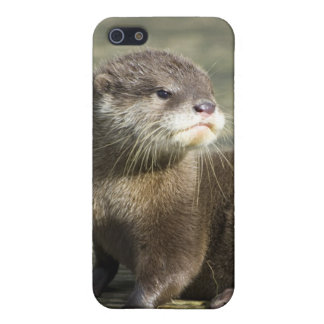 Cute Baby Otter iPhone 5/5S Cases