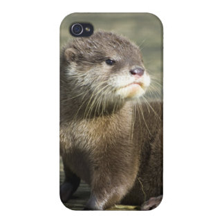 Cute Baby Otter iPhone 4/4S Covers