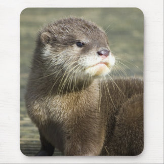 Cute Baby Otter Mouse Mat