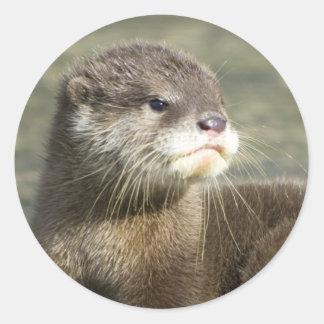 Cute Baby Otter Round Sticker