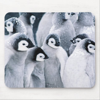 cute baby penguin penguins design mouse mat