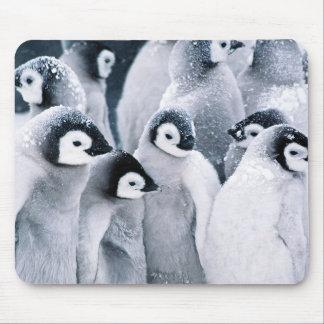 cute baby penguin penguins design mousepad