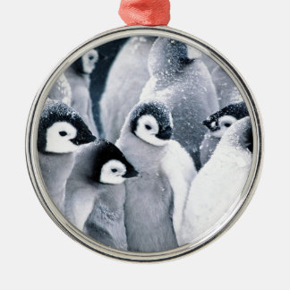 cute baby penguin penguins design Silver-Colored round decoration