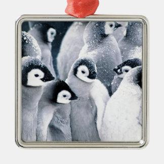 cute baby penguin penguins design Silver-Colored square decoration
