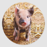 Cute Baby Piglet Farm Animals Babies