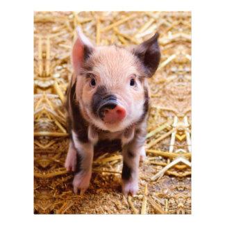 Cute Baby Piglet Farm Animals Babies 21.5 Cm X 28 Cm Flyer