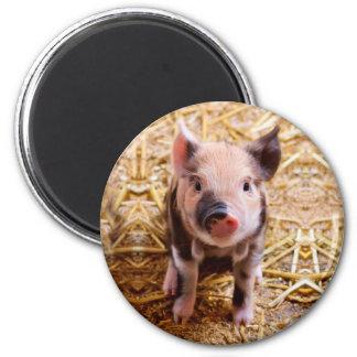 Cute Baby Piglet Farm Animals Babies 6 Cm Round Magnet