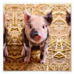 Cute Baby Piglet Farm Animals Babies Photograph