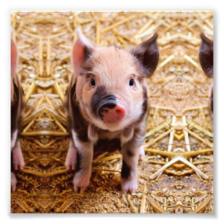 Cute Baby Piglet Farm Animals Babies Photograph