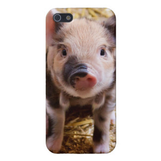 Cute Baby Piglet Farm Animals Barnyard Babies Case For iPhone 5/5S