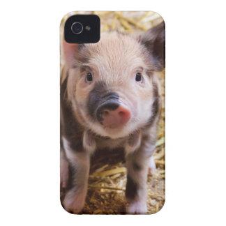 Cute Baby Piglet Farm Animals Barnyard Babies iPhone 4 Case