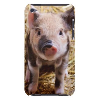 Cute Baby Piglet Farm Animals Barnyard Babies iPod Case-Mate Cases