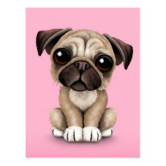 Cute Baby Pug Puppy Dog on Pink Postcard