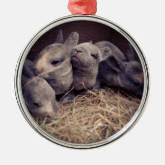 Cute baby rabbit photo design Silver-Colored round decoration