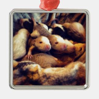 Cute baby rat photo design Silver-Colored square decoration