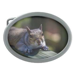 Cute Baby Squirrel Nature Photography Belt Buckle
