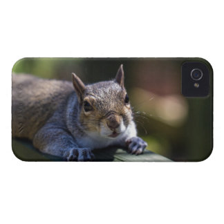 Cute Baby Squirrel Nature Photography Case-Mate iPhone 4 Case