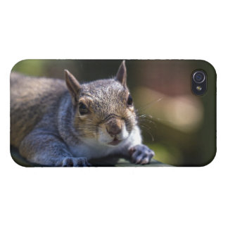 Cute Baby Squirrel Nature Photography Cover For iPhone 4