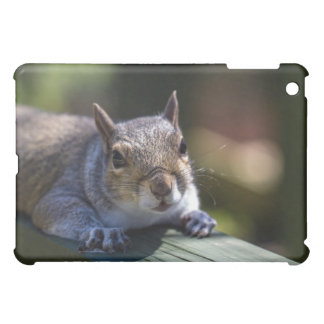 Cute Baby Squirrel Nature Photography Cover For The iPad Mini