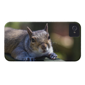 Cute Baby Squirrel Nature Photography iPhone 4 Case-Mate Case