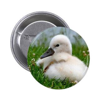 Cute Baby Swan - Button