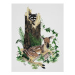 Cute Baby Whitetail Deer Fawn and Racoon Print