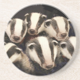 Cute Badger Cubs Drink Coaster
