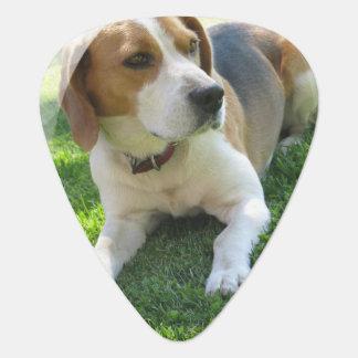Cute Beagle Guitar Pick