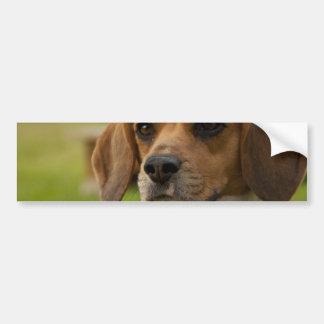 Cute Beagle Puppy Dog Bumper Sticker