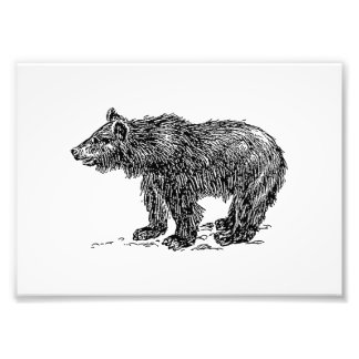 Cute Bear Cub Art Photo