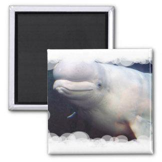Cute Beluga Whale Magnet Magnet