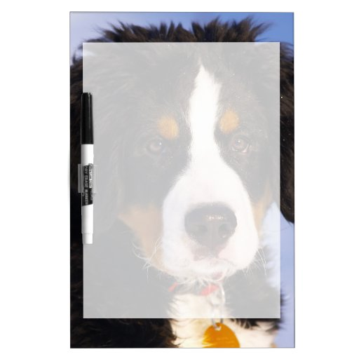 Cute Bernese Mountain Dog Puppy Picture Dry Erase Boards